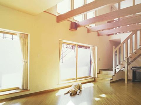 陽の当たる地下室